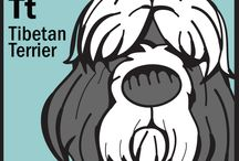 Tibetan Terriers - my loves