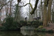 Concours et démonstrations de Débardage à cheval 2013 & 14 / Concours, démonstrations de débardage avec des Chevaux de trait