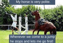 horse memes