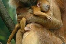 Madres y crias