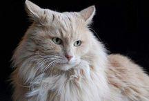 cats / by Kimberly