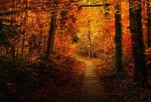 I love Autumn :)
