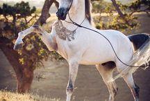 Horses / Perfect creatures