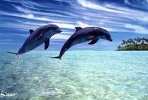 Vida en el océano de delfines