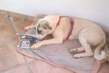 Animals 'reading' Horse & Hound / Amusing pictures of animals enjoying interacting with Horse & Hound magazine