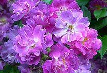 Blommor, trädgård.