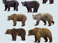 Da Bears / Variety of photos of Bears