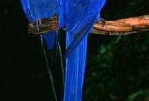 Blue / by Adora Diaz