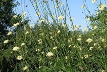 Plants I Need: Yellow / Yellow plants and flowers