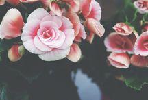 Flowers for Gardens