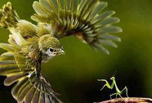 ptoki
