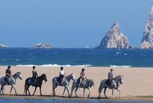 Horse Holiday Ideas / Different places to go for a holiday with your horse / by Abler Equine Pharmaceutical