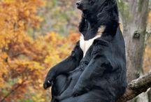 orso della luna