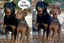 Vicces állatos képek