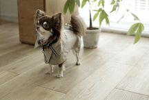 WEAR / CLOTHE for dog