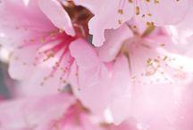 Flores inspiração