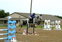 Equine Events / Horse Shows, Clinics,  Carriage Driving,  and more at the Grand Oaks Resort