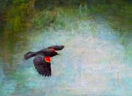 Bird paintings by various artists