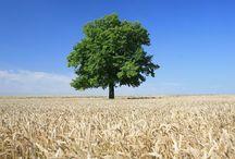 Alberi Preziosi / alberi