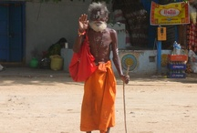 my india / by Padma Krishnan