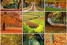 Seasonal times of the years... / by Sandee Dusbiber