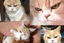 (=^・^=)ネコ