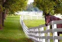 Kentucky / Planning a vacation early spring 2014 / by Audra Hodgin Reschly