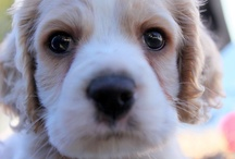 Puppy lovin / All of the cutest puppy photos!!