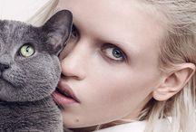 Fashion & Cats