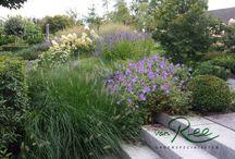 Modern landelijke tuin / Een fraai vormgegeven landelijke tuin met weelderige borders met vaste planten, Hydrangea's en siergrassen. De strakke belijning geeft de tuin een modern tintje.