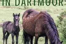 Dartmoor, UK