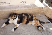 #Cats in #Rome by #free #tour #rome / Cats are hanging around in between the ruins of Largo di torre Argentina
