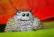 Cool Animals & Insects