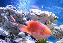 Rent Aquarium / Aquarium London #London