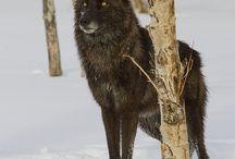 lupi e gatti