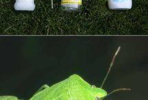 Garden health , eco