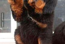 Furry friends :)