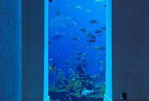 Aquariums  / by Crissy Riley