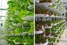 Vertical farming, factory farming