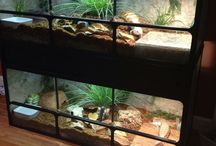 Blue Tongue Skink Enclosure