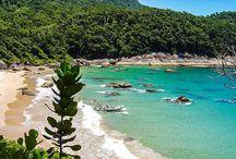 Praia sp