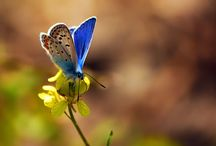 butterflies / by Andrea Frommer