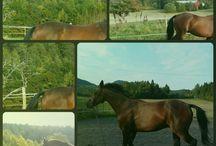 horse / My horse