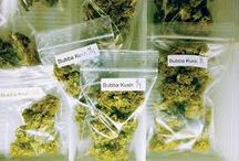 Medical Marijuana,Monterey county medical marijuana / Contact us today to get your Medical Marijuana and Monterey county medical marijuana only at cannafreedom.org visit us today or call us at 1-844-50-22662.