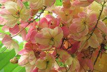 Flowers-S