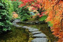 Life is a garden...