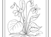 květina / omalovánky jarních květin