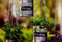 Garden in tins