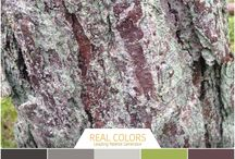 Palety kolorów MJS. Color Palettes by MJS / Natura - źródło inspiracji palety kolorów