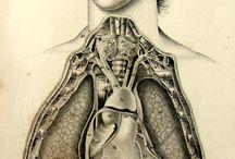 Anatomía vintage